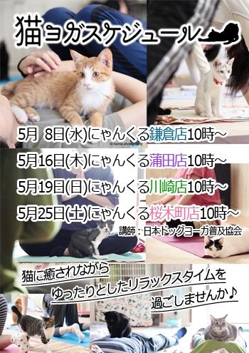 にゃんくる 桜木町店 猫ヨガ