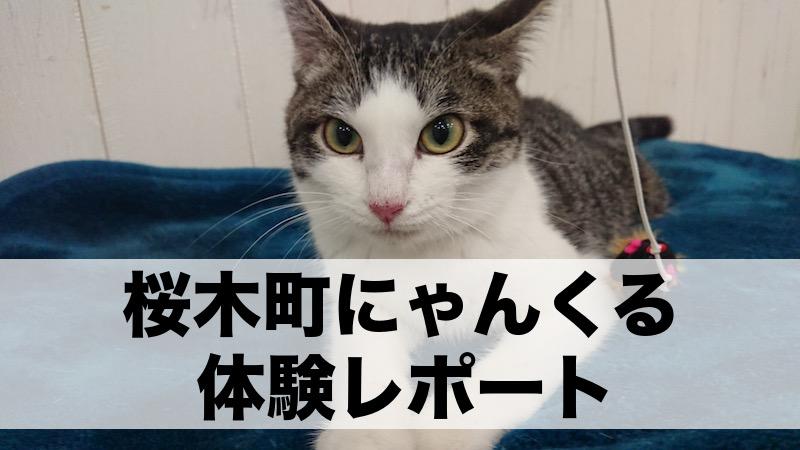 横浜の猫カフェなら「にゃんくる」がおすすめ!実際に行ってみた