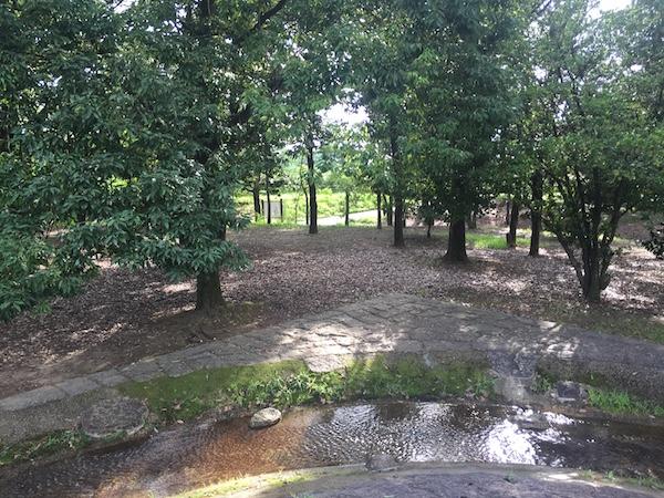 休日でも混んでない!自然溢れる山梨県の森林公園「金川の森」の体験レポート
