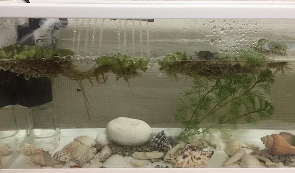 【熱帯魚飼育に癒される!】総額いくら?家庭用アクアリウムを設置してみた