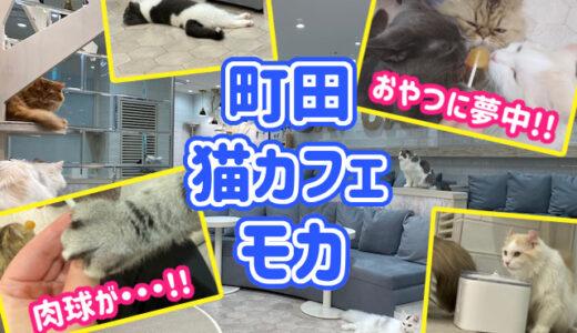 猫カフェ「MOCHA(モカ)」町田ジョルナ店の体験レポ!店内の様子や客層についても